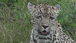 Download safariLIVE Fireside Chat - A tribute to Karula - May. 28, 2017 Video
