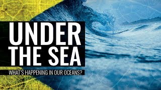 Download Under the Sea: What's Happening in Our Oceans - Professor Carolyn Roberts Video