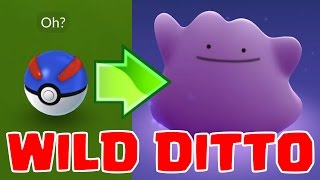 Download WILD DITTO | THE HARDEST POKEMON TO FIND | Pokemon GO Video