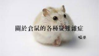Download 【喵桑】關於倉鼠的各種疑難雜症 Video