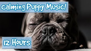 Download How to Calm Your Puppy Down! Ways to Relax Your Dog with Soothing Music and Calming Sound Effects!🐶 Video