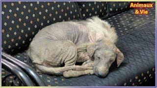 Download Ce chien malade a eu la meilleure des idées pour recevoir de l'aide, aujourd'hui il est... Video