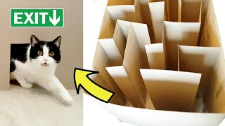Download Cat's maze. Where's the exit??? Video