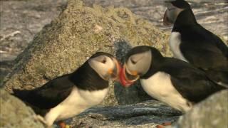 Download Seabird Success Story Video
