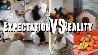 Download Guinea Pig Expectations Vs Reality ft. PetsPalaceTV  ♡Imy'sAnimals♡ Video