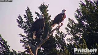 Download SWFL Eagles ~ A Beautiful Morning in the Pine 1.21.17 Video
