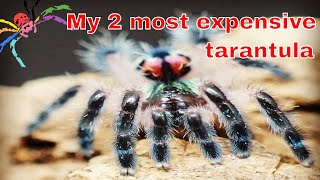 Download T seladonia #2 has moulted - Check out that JUMP! Video