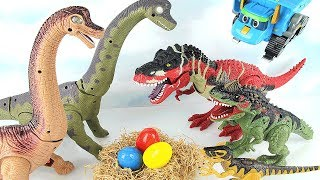 Download Dinosaur Walking and Laying Eggs Toy! Dinosaurs Toys For Kids. T Rex steal Brachiosaurus eggs~ 공룡 토이 Video