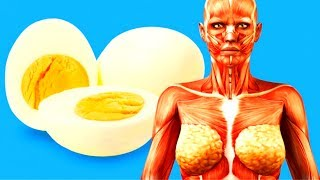 Download What Happens toYour Body WhenYou Start Eating2 Eggs aDay Video