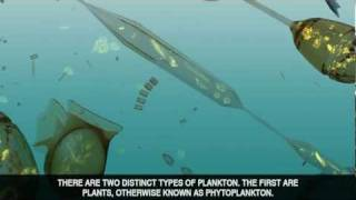 Download The Power of Plankton Video