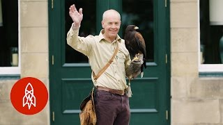 Download How Falconry Shaped the English Language Video