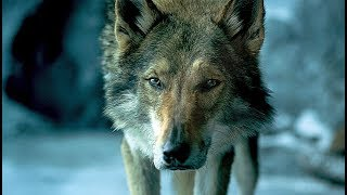 Download ALPHA | Trailer & Filmclips deutsch german [HD] Video