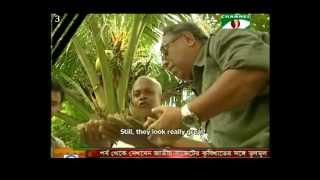 Download Mobile hatchery and PCR tested shrimp seeds bringing change in Bangladesh Video