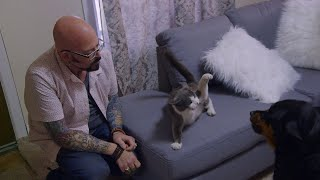 Download This Dog And Cat Are Acting Like Predator And Prey | Cat vs. Dog Video