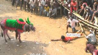 Download Bull race Amazing short movie|| award winning short movie for every indian Video