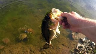 Download A Bass On Every Bait??? Ultimate Pond Fishing Challenge! Video
