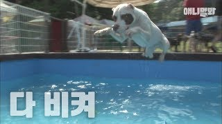 Download 수영장에서 만나면 피하고싶은 서타일.. ㅣ Type Of Dog You Would Avoid In The Swimming Pool Video