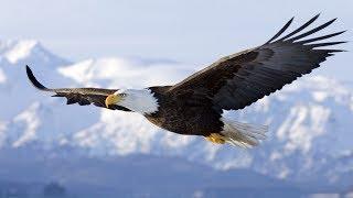 Download Spirit Animal ~ Eagle ~Native American Music -Niall Video