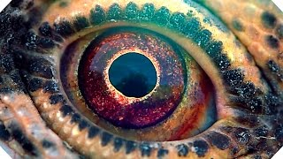Download VOYAGE OF TIME Trailer (Brad Pitt, Terrence Malick - Documentary, 2016) Video