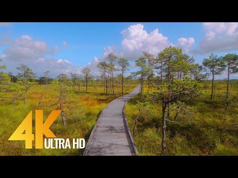 Nature of Estonia in 4K - Virtual Nature Walk - Short Preview Video