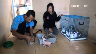 Download NET24 - Kucing Ras Langka Video