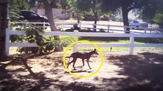 Download 5 Chupacabras Caught On Camera & Spotted In Real Life! Video