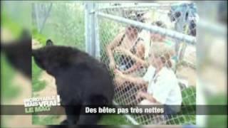 Download bêtisier d'animaux trop marrant :D Video