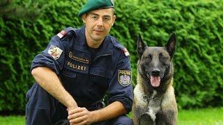 Download Planet Wissen - Tierische Beamte, Polizeihunde Video