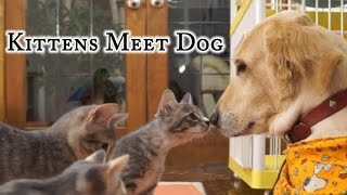 Download Kittens Meet Dog Video