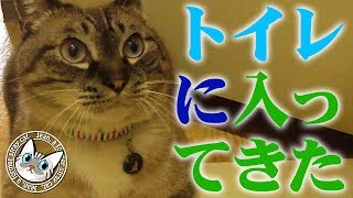 Download 【463】ジャン❤︎ポン 6年半でやっと一緒にトイレに入ってくれた 元野良猫の保護里親記録 Jean & Pont, former stray cats. Video