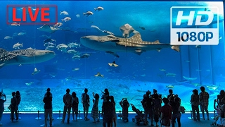 Download ″World's biggest Aquarium″ 🐠🌎 (2017) #Live Shows | Subscribe now! Video