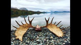 Download 3 Giant Alaskan Bull Moose!! EPIC DIY hunt - The Journey Video