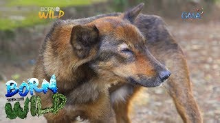 Download Born to Be Wild: Canine Distemper outbreak in Camiguin Norte Video