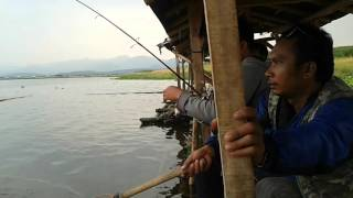 Download Mancing cirata dapat induk 4 kg badot cikadu mntap Video