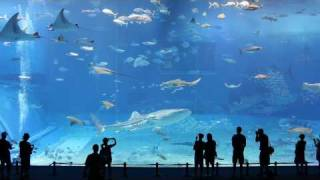 Download Kuroshio Sea - 2nd largest aquarium tank in the world - (song is Please Don't Go by Barcelona) Video