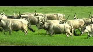 Download Hungarikum a pusztában - 2014 Video