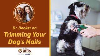 Download Dr. Becker on Trimming Your Dog's Nails Video