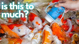 Download HOW TO FEED YOUR FISH Video
