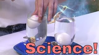 Download Physics Experiment with Density - Floating Eggs! Learn about buoyancy, why things float, and more! Video