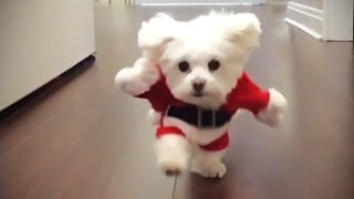 Download Funniest DOGS IN COSTUMES 2017 [Funny Pets] Video