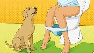 Download Das ist der Grund, wieso Hunde dir ins Badezimmer folgen! Video