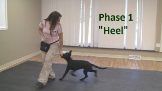 Download How to Train a Dog to ″Heel″ (K9-1) Video