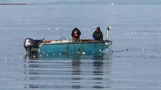 Download Gillnet Fishing in Dungeness Bay Video