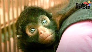 Download Spider Monkey Rescued From Circus Meets His First Friend | Dodo Heroes Video