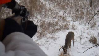Download Spine shot from the stand - 4 x 5 white tail Video