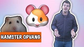 Download HAMSTER OPVANG BIJ DPTV KIJKERS   DierenpraatTV Video