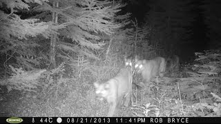Download Trail Camera Footage Prince George, BC Video