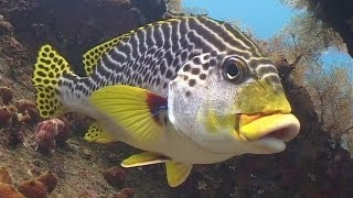 Download Diving in Bali (720p) Video