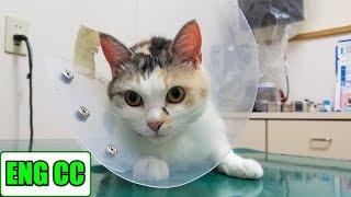 Download 三毛猫姉さんのワクチン接種2018 Video
