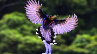 Download Beautiful Birds 1 Video